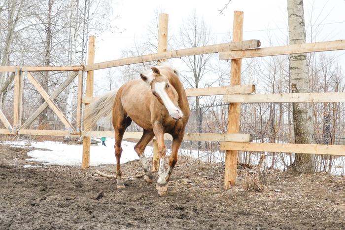 «Победа, Гибкая, Малышка, Нюша и Оскар не спаслись»: в Перми на пожаре в конном клубе погибли лошади Пермь, Лошади, Пожар, Негатив