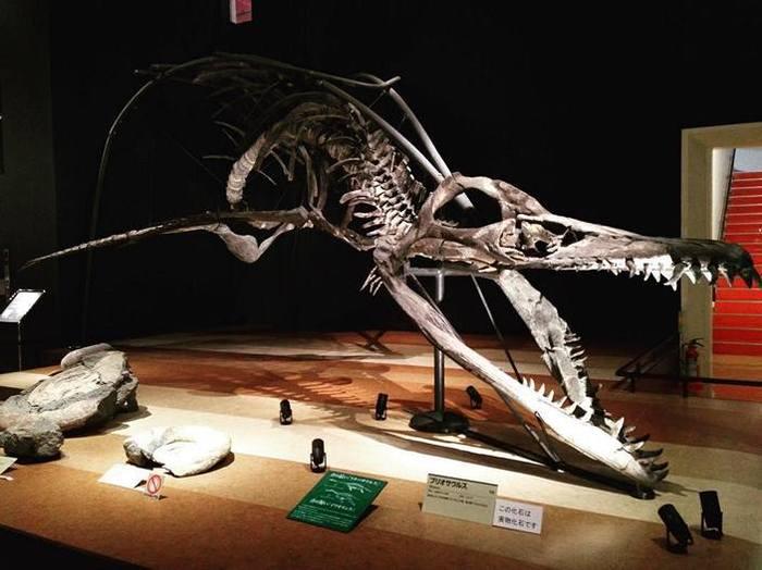 Гигантский русский плиозавр Палеонтология, Мезозой, Россия, Elementy ru, Длиннопост, Окаменелости