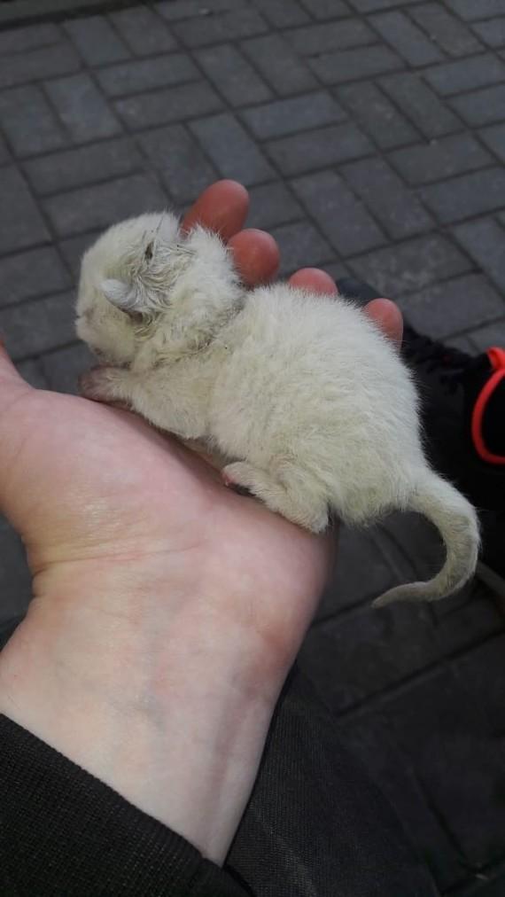 Просьба о помощи ! Кот, Москва, Помощь, Котомафия, Длиннопост, Без рейтинга, Помощь животным, Котята