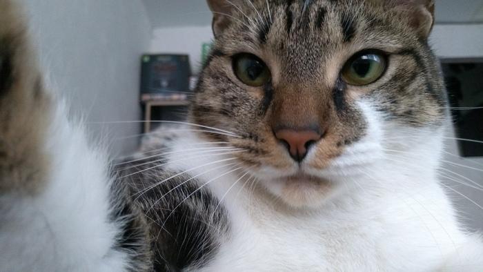 И у котов бывает проблема по выбору удачной фотографии Кот, Селфи, Аватар, Сложный выбор, Длиннопост