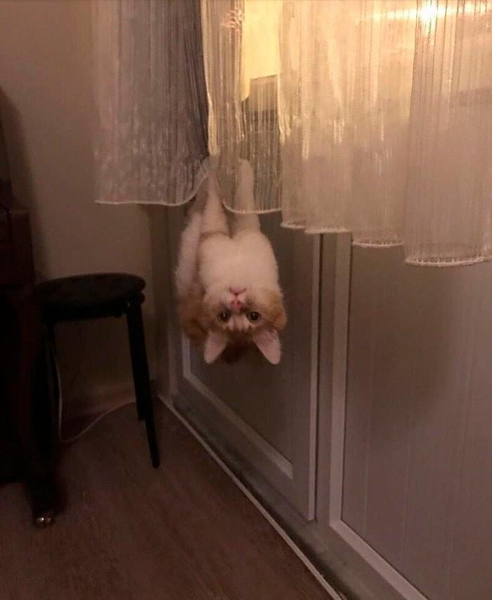 Держусь Кот, Котомафия, Вверх ногами, Домашние животные