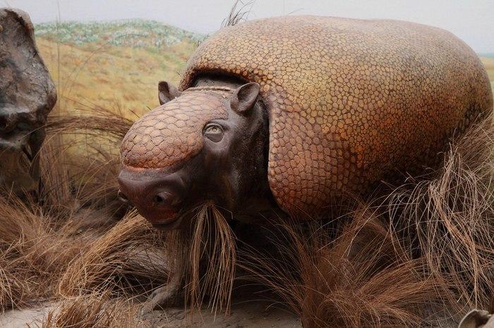 Мертвые уголки. Музей, Окаменелости, Палеонтология, Южная Америка, Фауна, Длиннопост