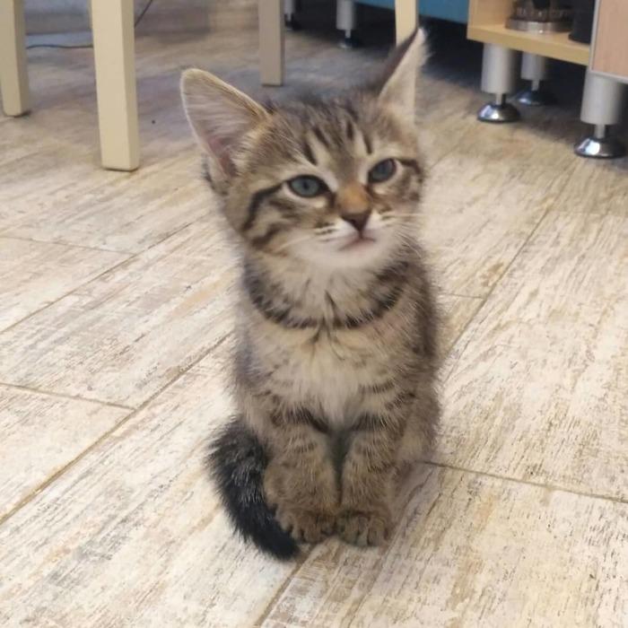Моя Маруська:) Кот, Котомафия, Длиннопост