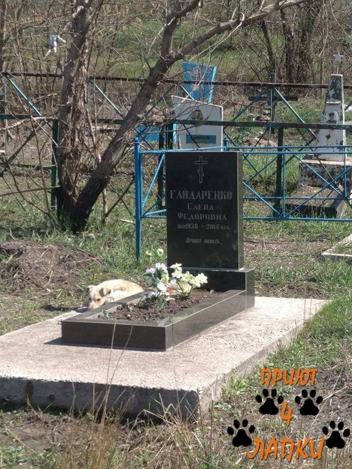 Однажды, на одной из могил... Животные, Собака, Приют для животных, Помощь животным, Волонтерство, Щенки, Длиннопост