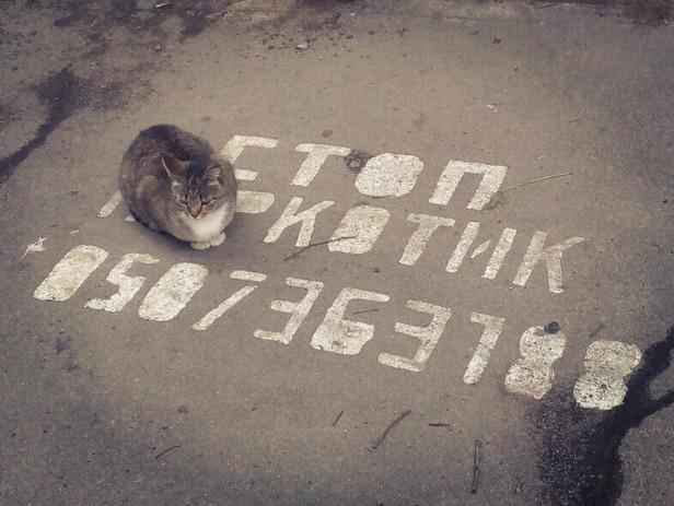 Стоп, котик