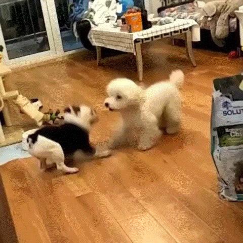 Синхронные танцы