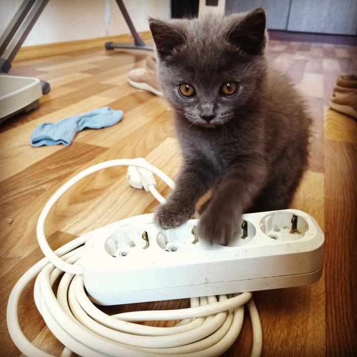 Переноска для кота