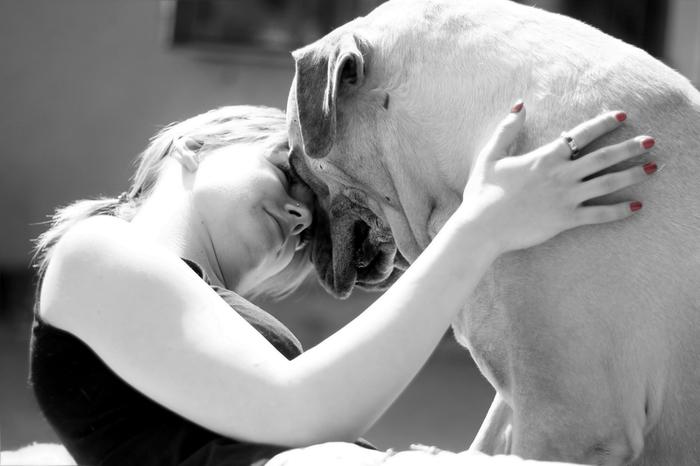 Как возня с собакой влияет на наш мозг Собака, Длиннопост, Животные, Забота