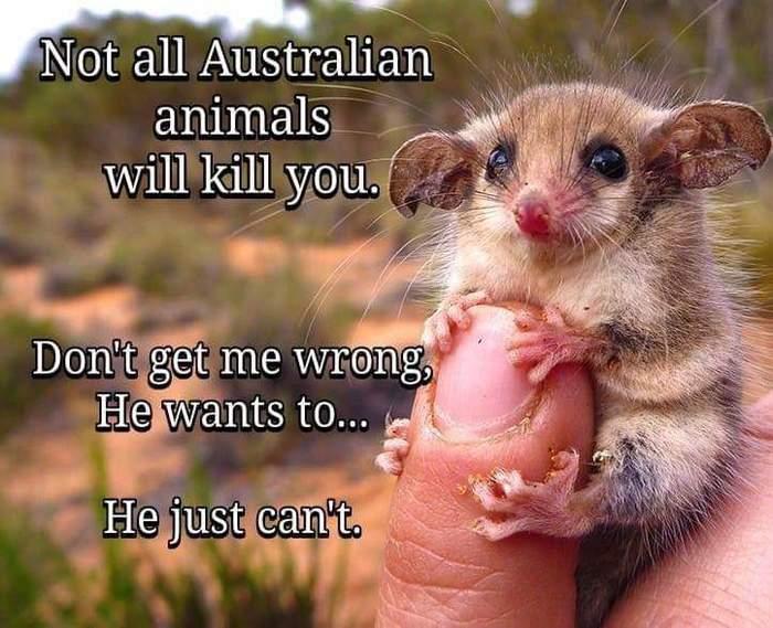 Не все австралийские животные... Австралия животные, Австралия, Животные, Юмор
