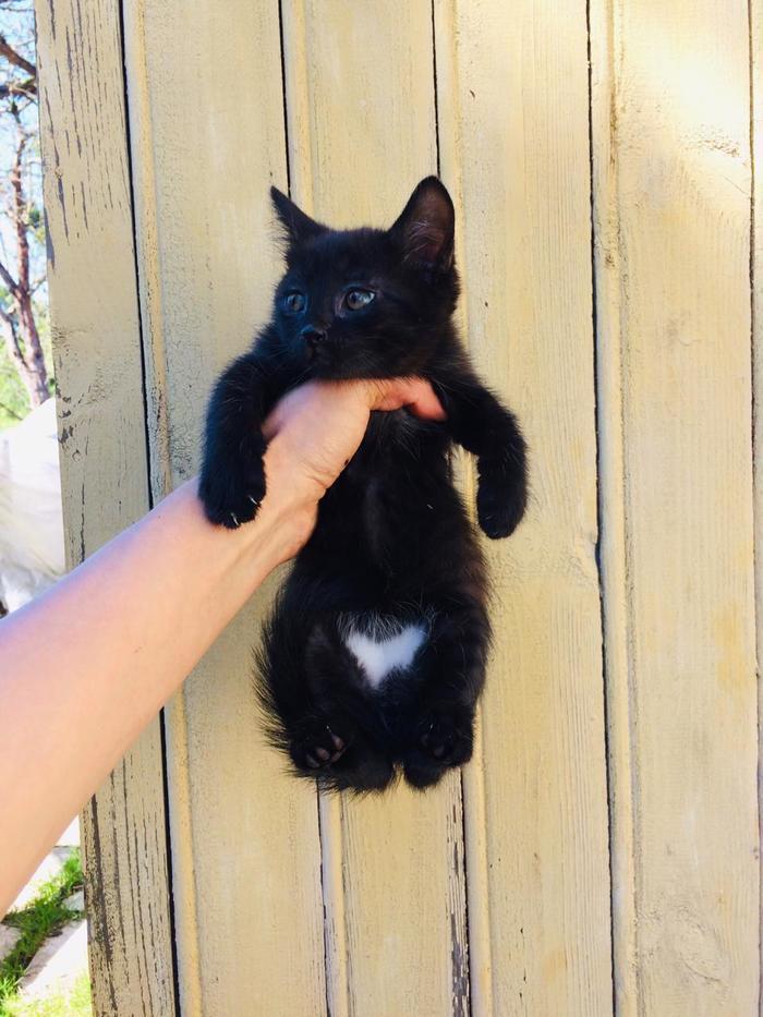 Котенок Масяня ищет дом. А с ней и еще одно черное Исчадие. В добрые руки, Котята, Кот, Помощь животным, Без рейтинга, Санкт-Петербург, Длиннопост