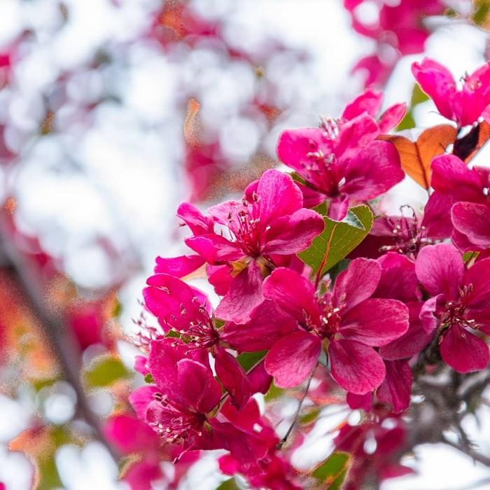 Весна Весна, Пейзаж, Природа, Яблоневый цвет, Цветение, Длиннопост