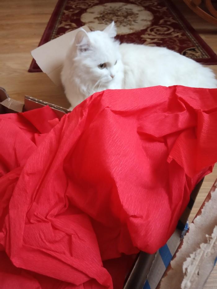 Цвет настроения КРАСНЫЙ из Сочи в Новосибирск!!! Тайный Санта, Обмен подарками, Длиннопост