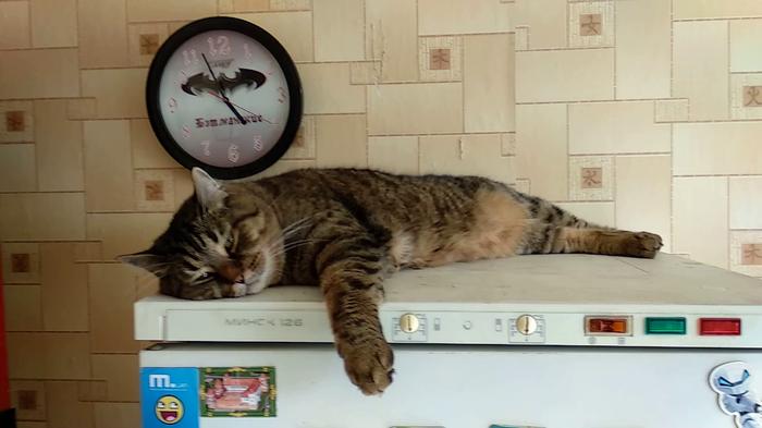 Холодильник мой и все, что в холодильнике тоже)))