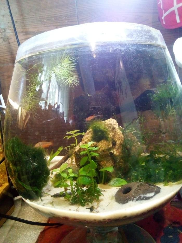 Мои аквариумы Аквариум, Аквариумные рыбки, Длиннопост