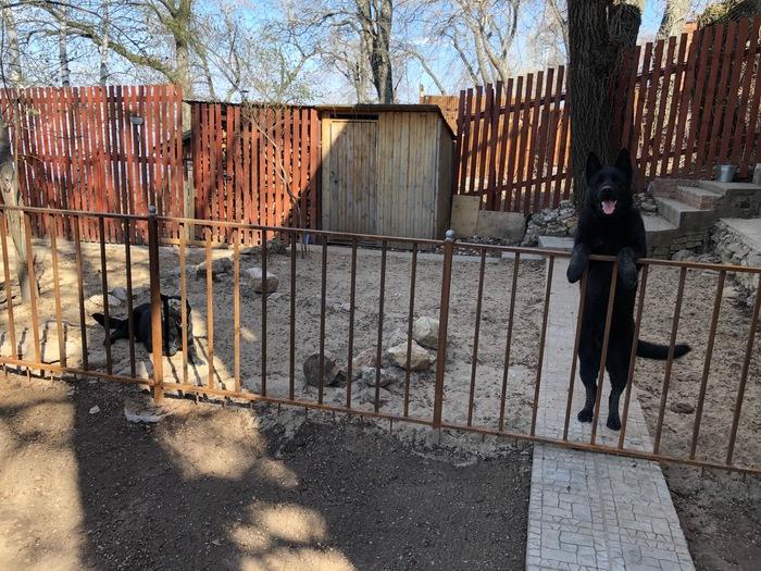Мамашка Собака, Рождение щенков, Радость, Фотография, Видео, Длиннопост