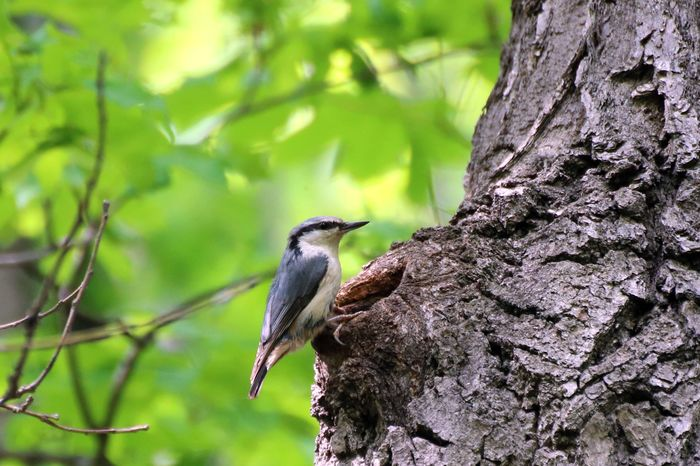 Гнездо в дупле Птицы, Орнитология