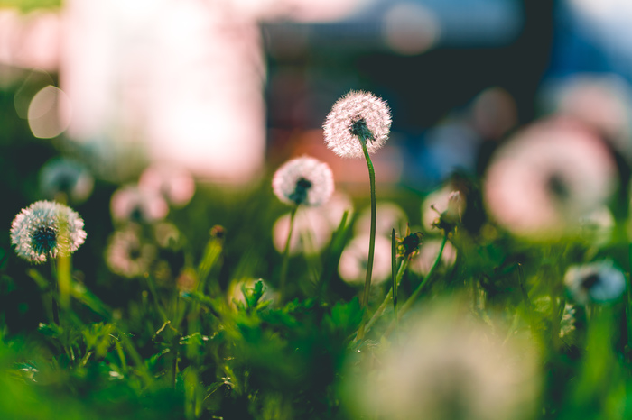 Природа в свете закатного солнца Фотография, Цветы, Свет
