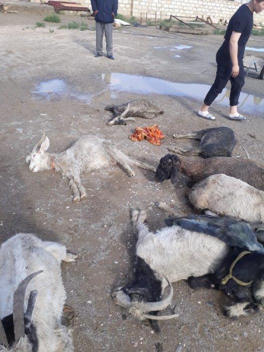 В Казахстане градом убило домашний скот Казахстан, Погодные аномалии, Град, Жесть, Негатив, Происшествие, Видео, Длиннопост, Скот