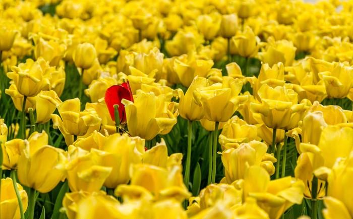 Цветение Цветы, Природа, Весна, Фотограф, Краски, Длиннопост, Тюльпаны, Сирень, Яблоня
