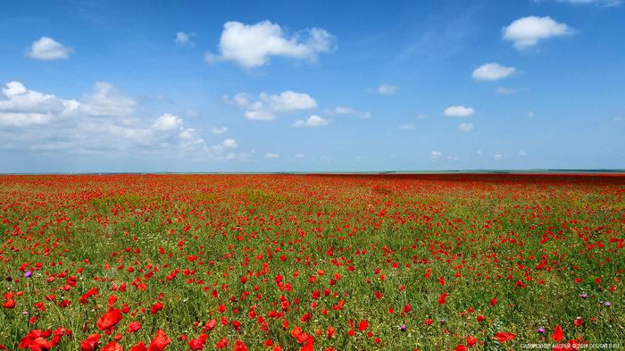 Крым. Где-то в районе Красной поляны. Крым, Красота России, Пейзаж, Фотография, Мак, Красная поляна, Весна