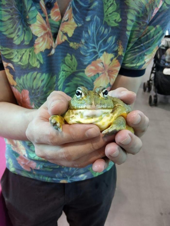 """""""Я жаба , и мне просто збс!"""" Лягушка-Водонос, Лягушки, Картинки"""