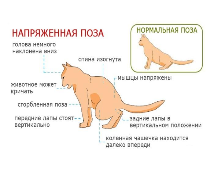 Никогда не сдавайтесь. Ч.1 Ветеринария, Кот, Мочекаменная болезнь, Спасение животных, Хпн, Лечение, Ветеринарная клиника, Длиннопост