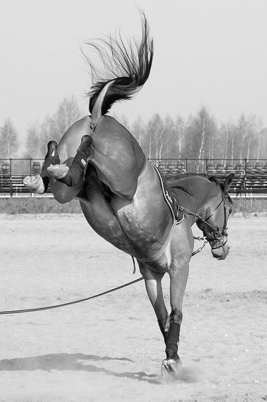 В конном клубе Екатеринбурга лошадь раздробила лицо школьнице Лошади, Дети, Негатив, Новости, Екатеринбург, Длиннопост