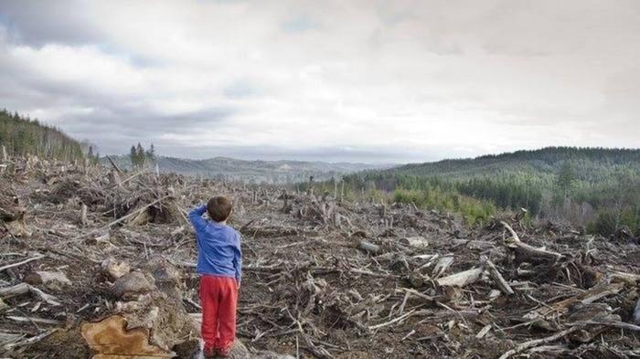 Скоро лесов в сибири не станет! Тайга, Вырубка, Потеря, Человечество, Путешествия, Пожар