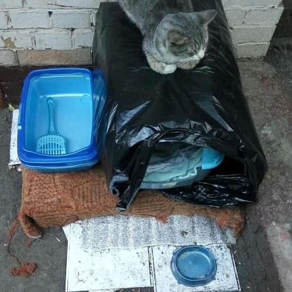 Выкинули кота Кот, В добрые руки, Москва, Домашние животные, Без рейтинга, Химки