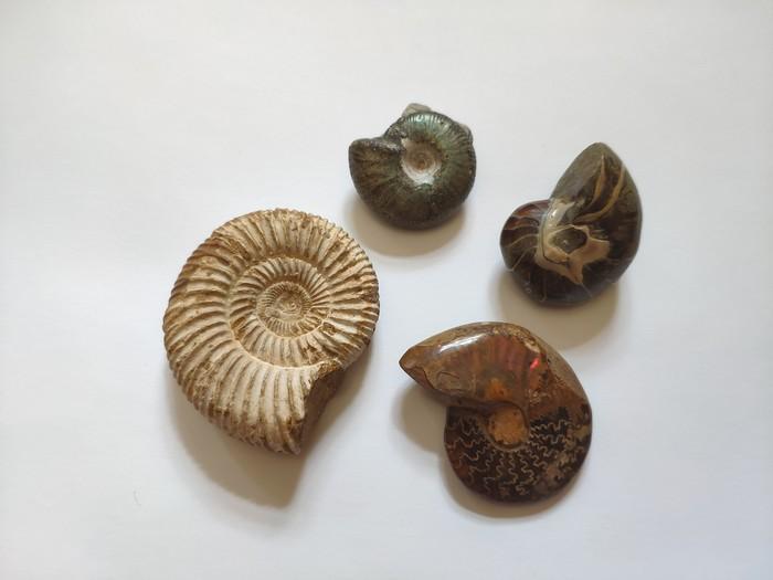 Коллекция окаменелостей и немного о них Окаменелости, Палеонтология, Коллекция, Необычное, Коллекционирование, Древность, Длиннопост
