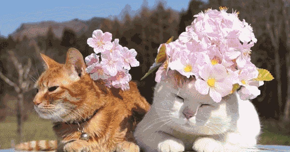 Животные с цветами гифки смешные