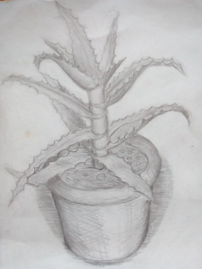 Зарисовки на растения Рисунок карандашом, Растения