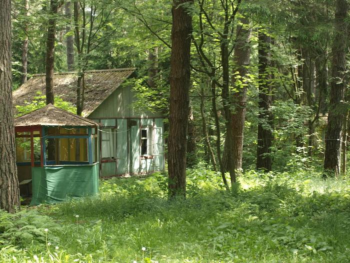 Старый детский лагерь Кай йара, Лес, Турбаза, Лагерь, Лето, Зелень, Длиннопост