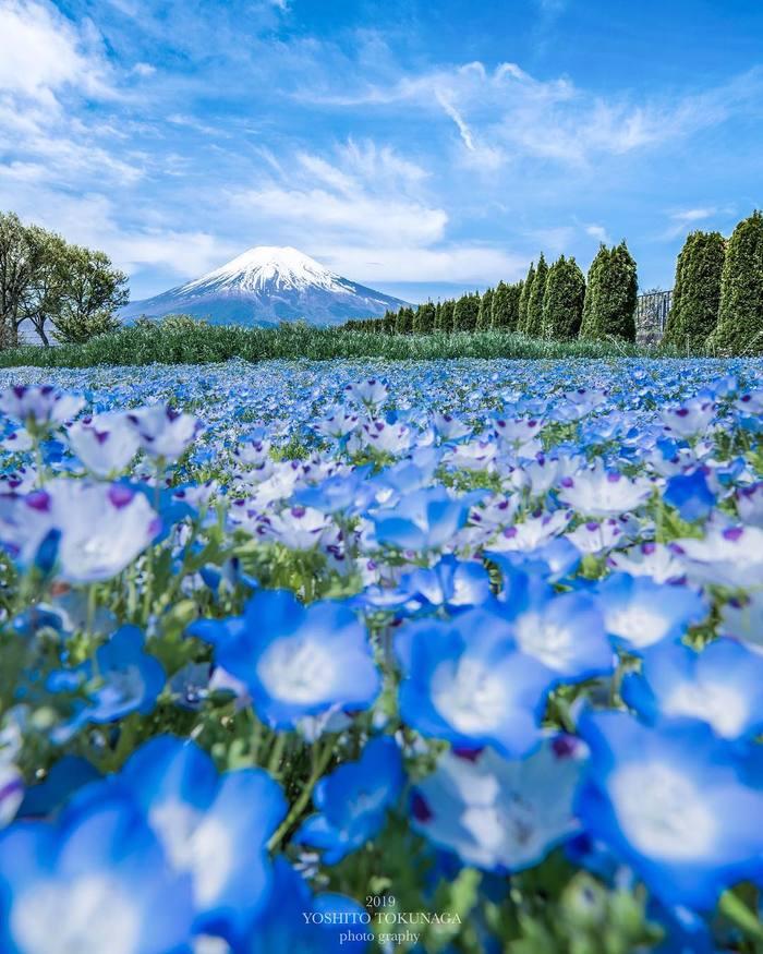 Вид на Фудзи со стороны Яманаси