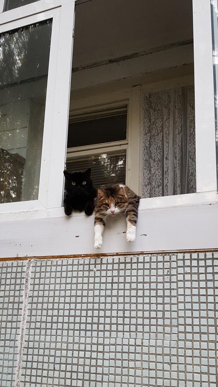 Выдался тяжёлый денёк Кот, Балкон, Видео, Длиннопост, Кишинев