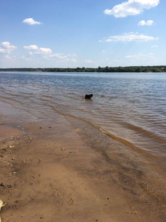 Одинокий чёрный мопс на Великой Волге-матушке-реке