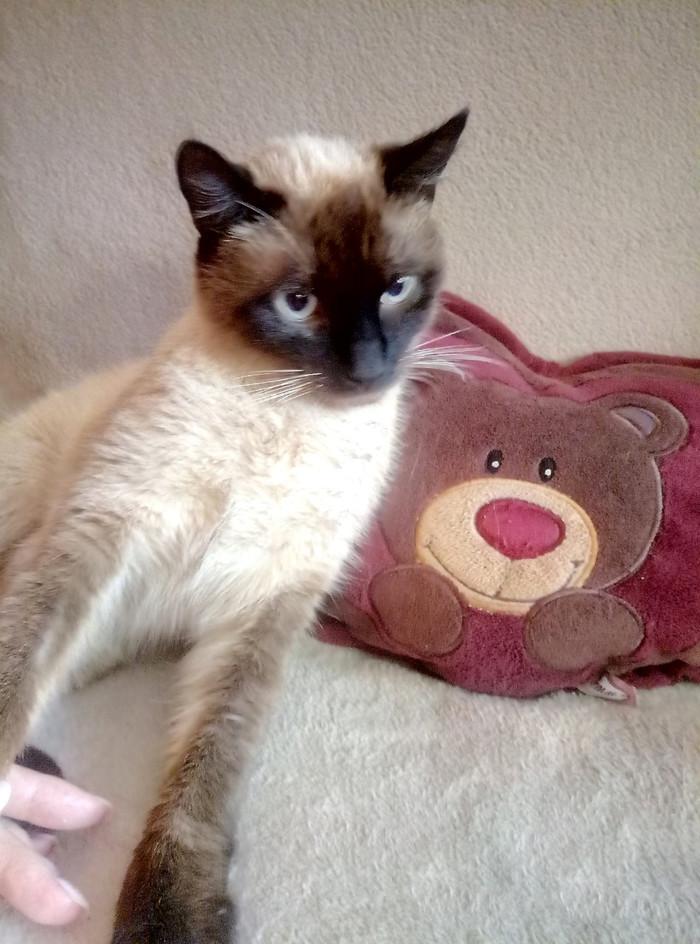 Потерялся котейка Потеряшка, Кот, Краснодар, Адыгея, Без рейтинга, Потерялся кот, Помощь животным, Ищу хозяина