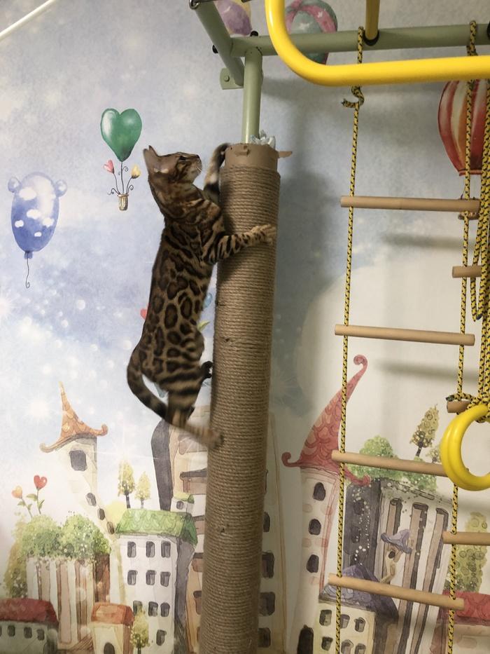 Когтеточка (большая и длинная) Когтеточка, Кот, Своими руками, Рукоделие с процессом, Длиннопост