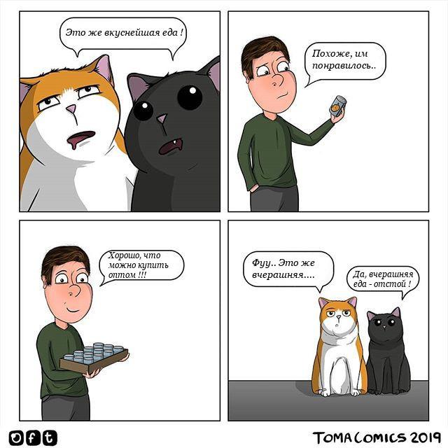 Совет для начинающих кошатников