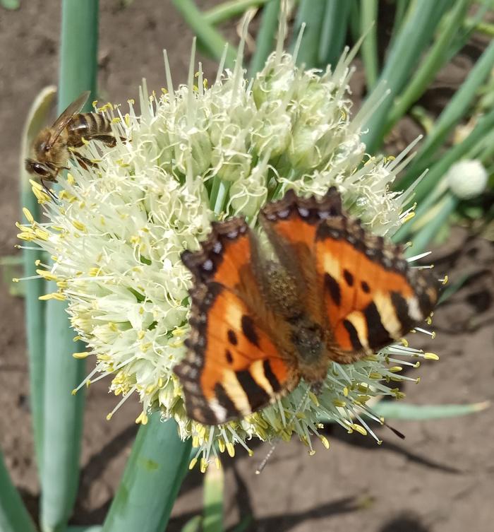 Сделать паузу Бабочка, Листья, Лето, Мир, Красота природы, Длиннопост