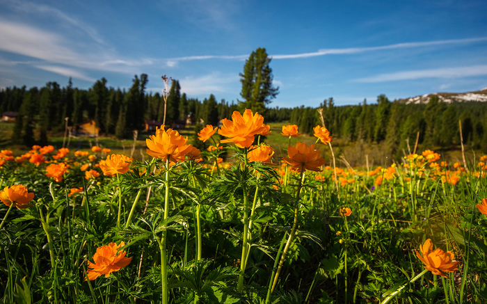 Пикабушники в раю Ергаки, Путешествия, Активный отдых, Отдых в России, Отдых на природе, Цветы, Длиннопост