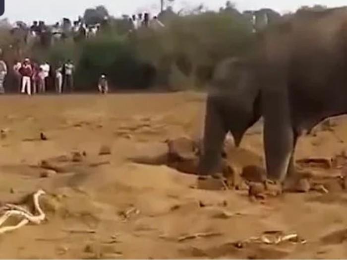 11часов безуспешно слониха копала яму. Узнав причину люди помогли. Слоны, Спасение, Индия, Дикая природа, Помощь, Видео