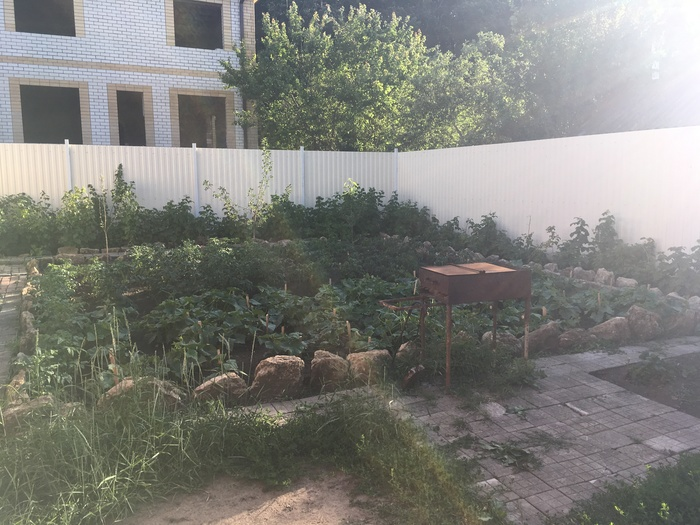 Теневой навес для овощей. Сад, Огород, Навес, Тень, Огурцы, Помидор, Ставрополь, Длиннопост