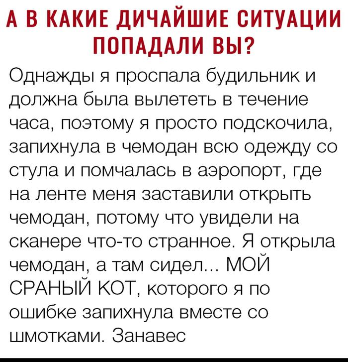 А в какие дичайшие ситуации попадали вы? Юмор, Вконтакте, Кот, Багаж, Поездка