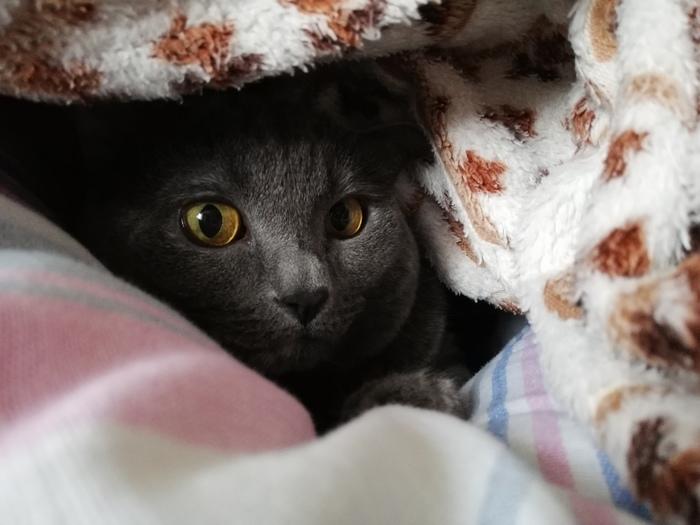 Собираюсь брать кота с улицы, нужен совет Кот, Домашние животные, Нужен совет, Вопрос к кошатникам