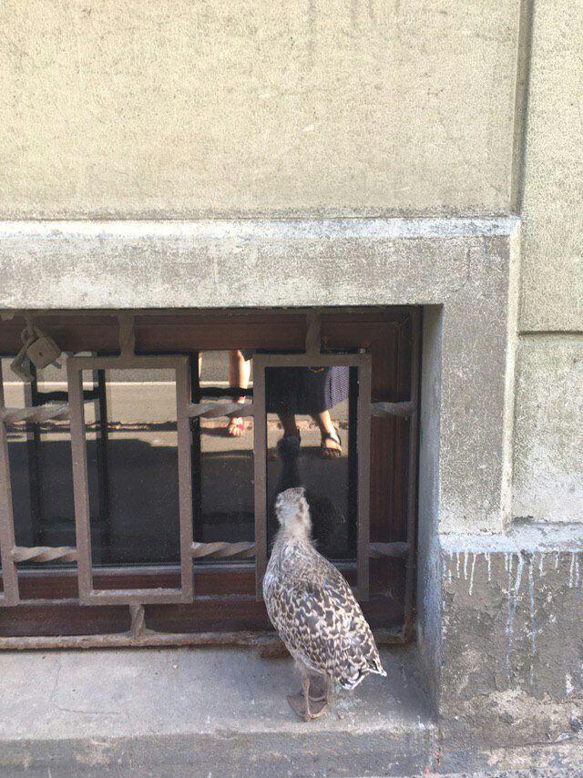 Подскажите пожалуйста что за птица! Птицы, Спасение птицы, Длиннопост
