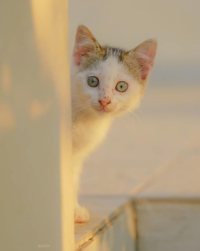 Кажется этот котик немного удивлен