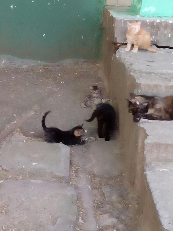 Котята даром! Волгодонск. Кот, Котомафия, В добрые руки, Котята, Помощь, Длиннопост