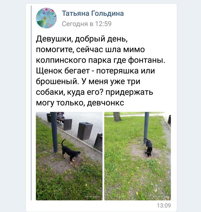 Санкт-Петербург и Ленинградская область. Щенок очень ищет передержку или дом. Собака, В добрые руки, Собачьи будни, Помощь животным, Ищу дом, Без рейтинга, Длиннопост