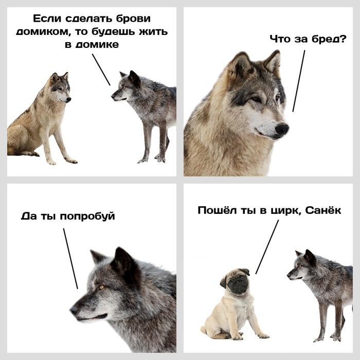 Новость №857:Появление подвижных собачьих бровей объяснили одомашниванием Наука, Образовач, Волк, Собака, Биология, Эволюция